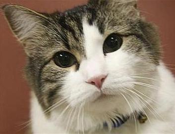 oscar the death cat